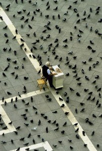 bird food salesman